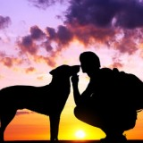 The boy with a dog against to sunset.