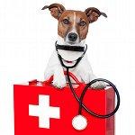 vetalia-veterinaire-a-domicile-premiers-secours