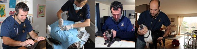 Consultations vétérinaire d'urgence à Paris