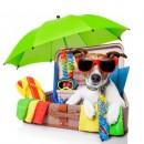 vacances ete chien