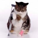 veterinaire-de-garde-boiterie
