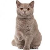 vetalia-urgence-veterinaire-asthme-chat