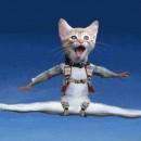 urgence-veterinaire-chat-parachutiste