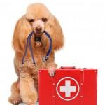 urgence-veterinaire-paris-trousse-secours