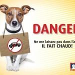 urgence-veterinaire-canicule-vetalia