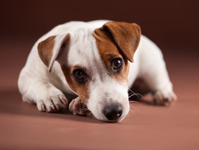 les sympt mes d 39 un chien qui souffre vetalia v t rinaire de garde. Black Bedroom Furniture Sets. Home Design Ideas
