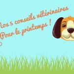 cinq-conseils-veterinaires-pour-le-printemps