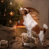 urgence-veterinaire-noel-chien