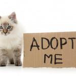 adoption-chat-vetalia