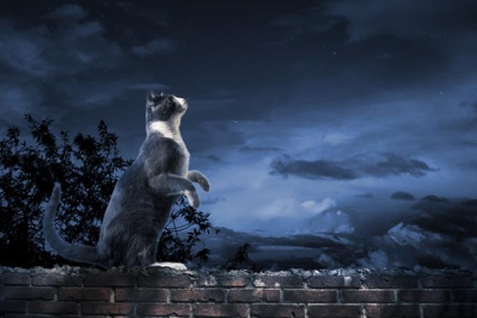 Cougar rencontre site gratuit