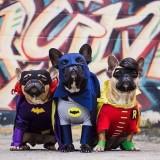 chiens-deguises-super-heros