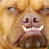 drole-de-face-de-chien