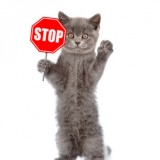 Cat holding stop sign. Isolated on white background