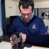 vetalia-veterinaire-a-domicile-paris
