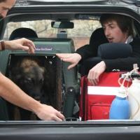 transport d'animaux en urgence