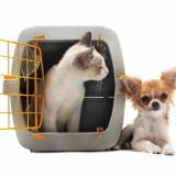 chaton en cage et chihuahua