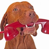 dog holding phone receiver