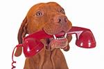 vetalia-veterinaires-a-domicile-reponse-telephonique1