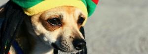 chien Bob Marley