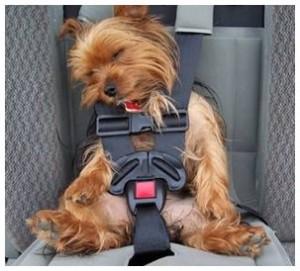 chien dort en voiture