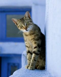 chat en bordure
