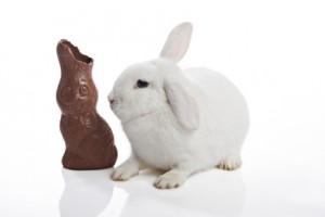 lapin et chocolat