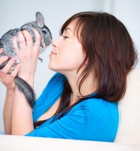 vétérinaire avec un chinchilla