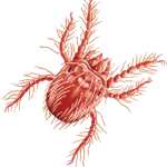 vetalia-urgence-veterinaire-aoutats