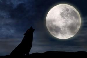 loup devant la Lune