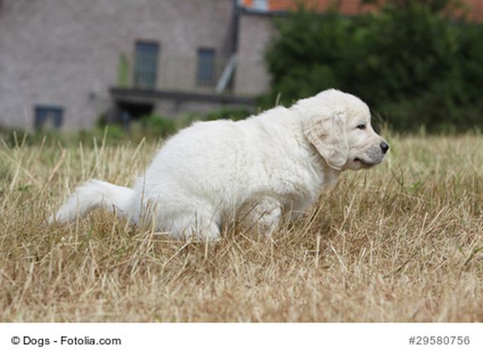 diarrhees-chiens-urgence-veterinaire
