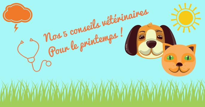 5 conseils vétérinaires