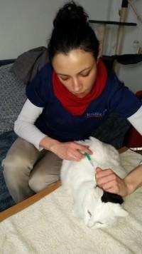 examen vétérinaire du chat