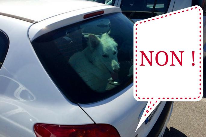 chien bloqué en voiture