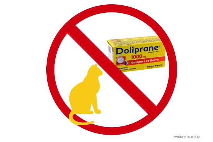 doliprane interdit aux chats