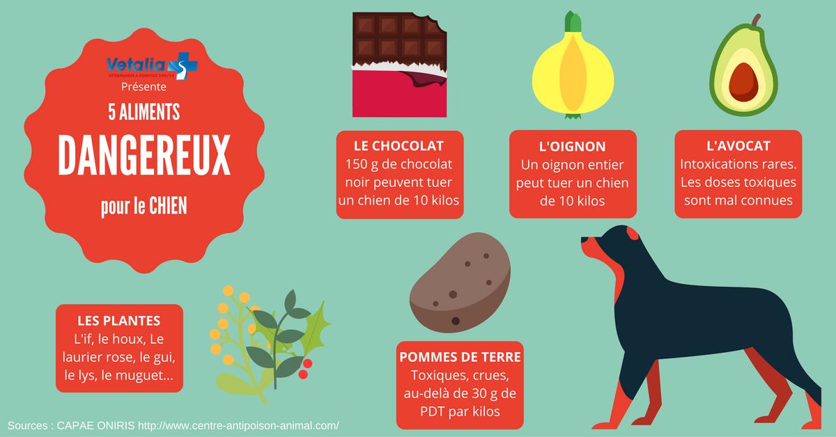 5 aliments toxiques chez le chien