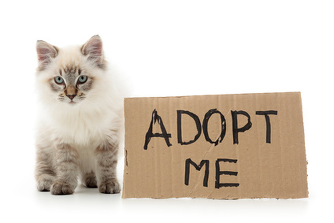 adoption-chat-vetalia