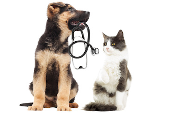 diagnostic chien et chat