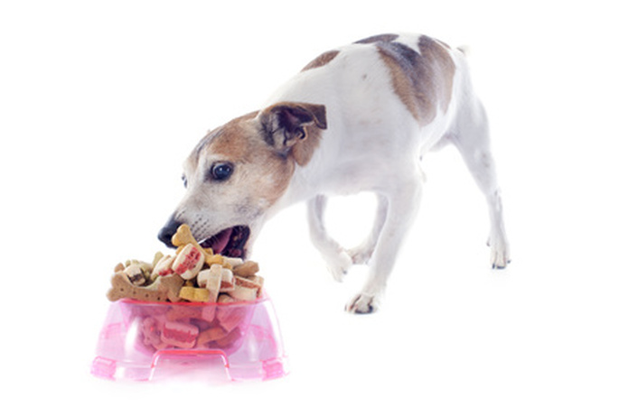 chien mange friandises