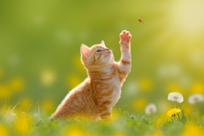 chaton joue dans l'herbe