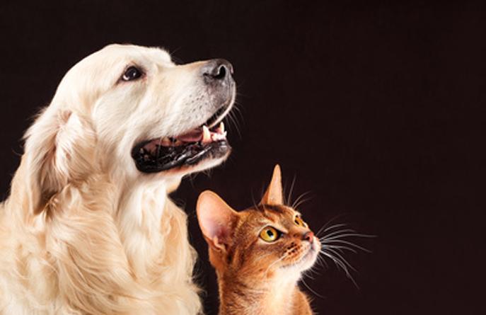chien et chat attentifs