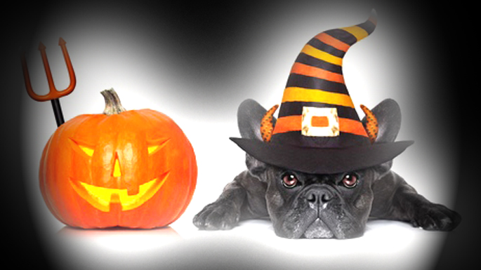 halloween pour chien