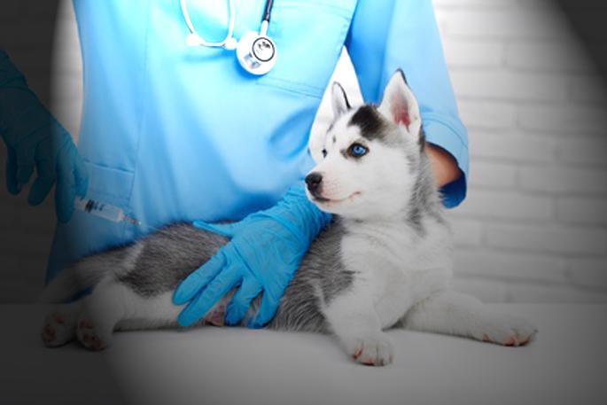 chien vacciné