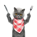 cat wants to eat and hold knife and fork