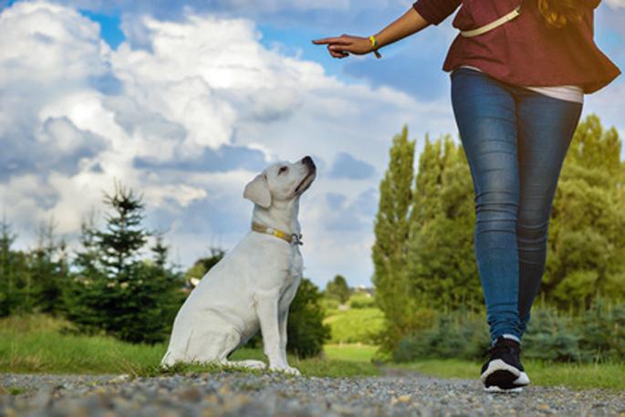 éduquer le chien
