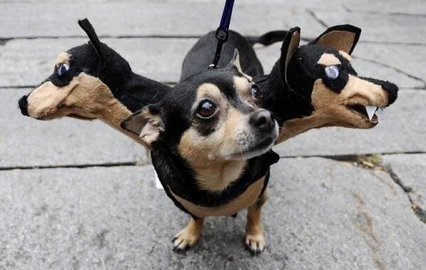 deguisement-halloween-chien