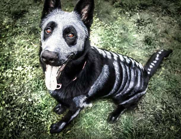 skeleton-dog-halloween-costume-non-toxic-pet-paint-2-610x468