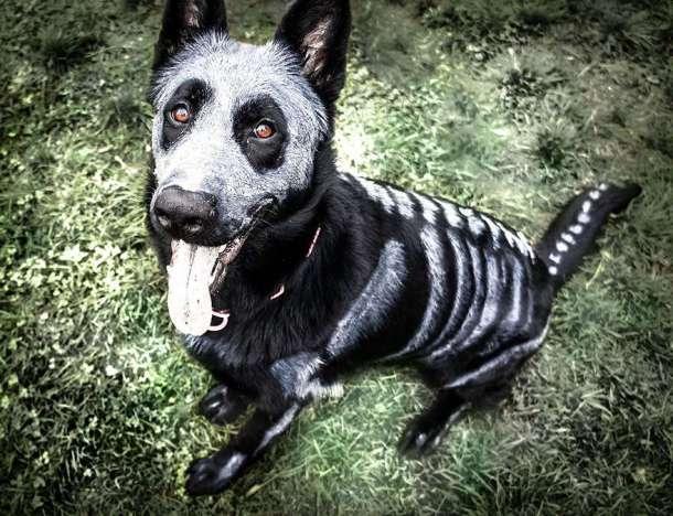 déguisement chien squelette