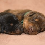 Two new born puppies sleeping