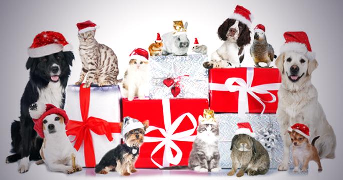 dangers des cadeaux de Noël