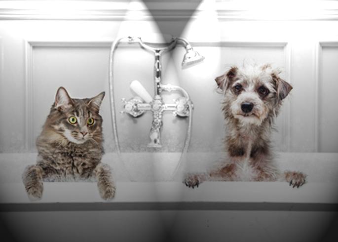 chien et chat dans la beignoire